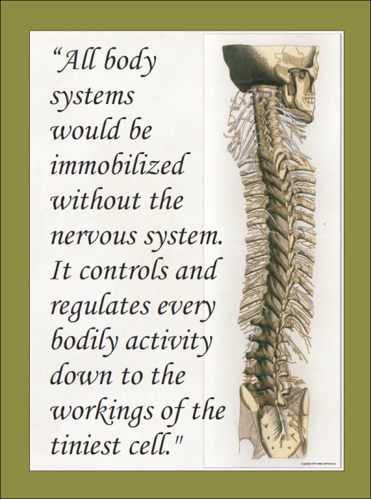 Nervous System Quote Poster 18 X 24
