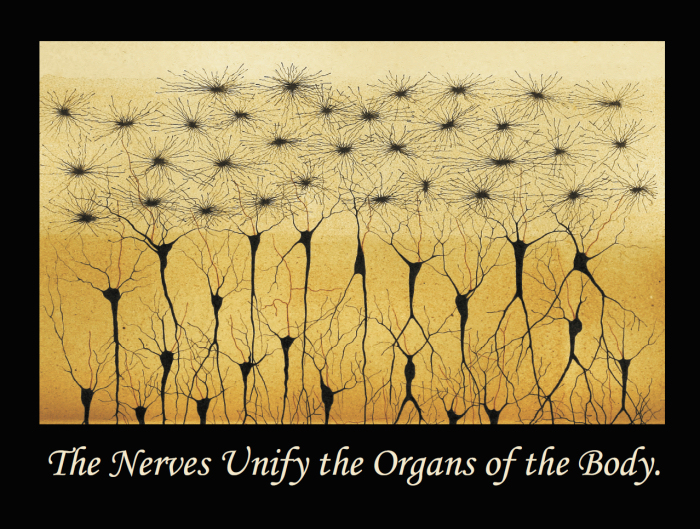 Nerves Unify Quote