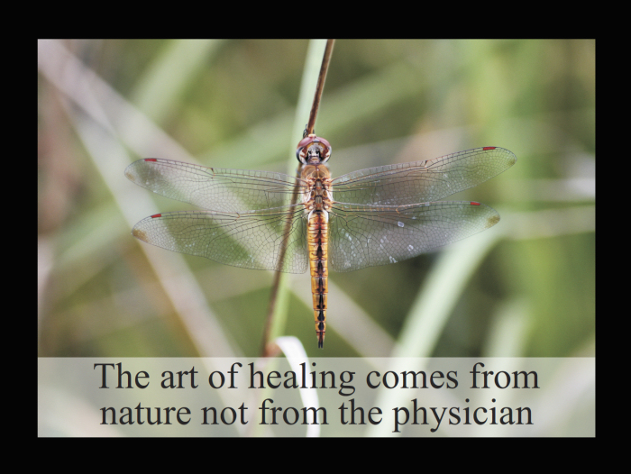 Art of Healing Quote