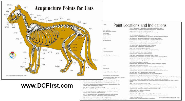 Cat Aacupuncture Chart