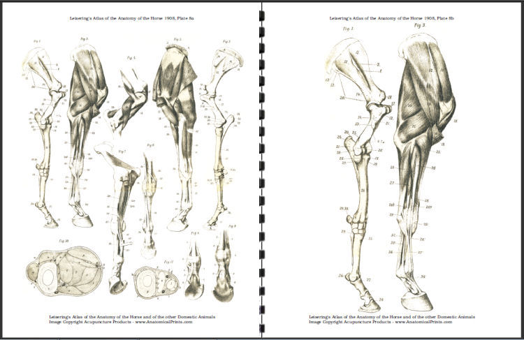 Atlas of Horse Anatomy