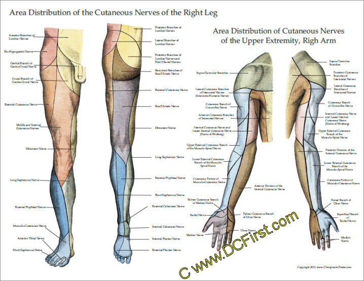 Upper & Lower Extremity Poster