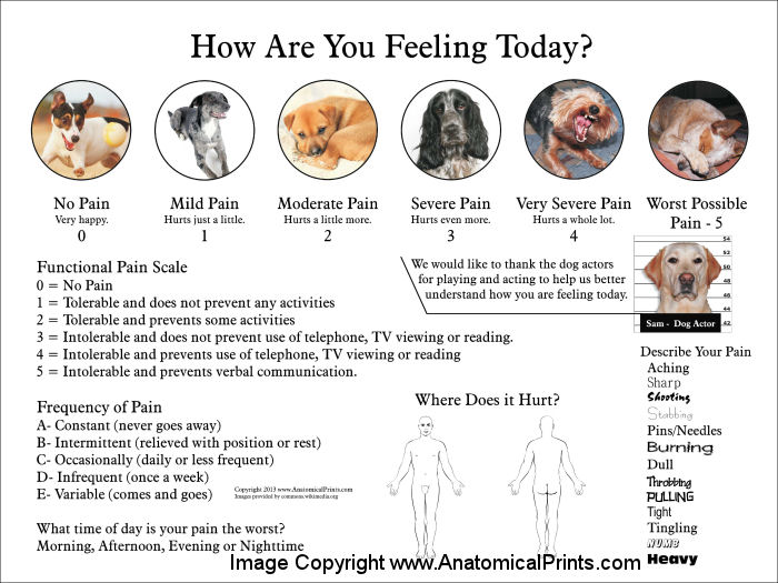 Pain Scale Poster