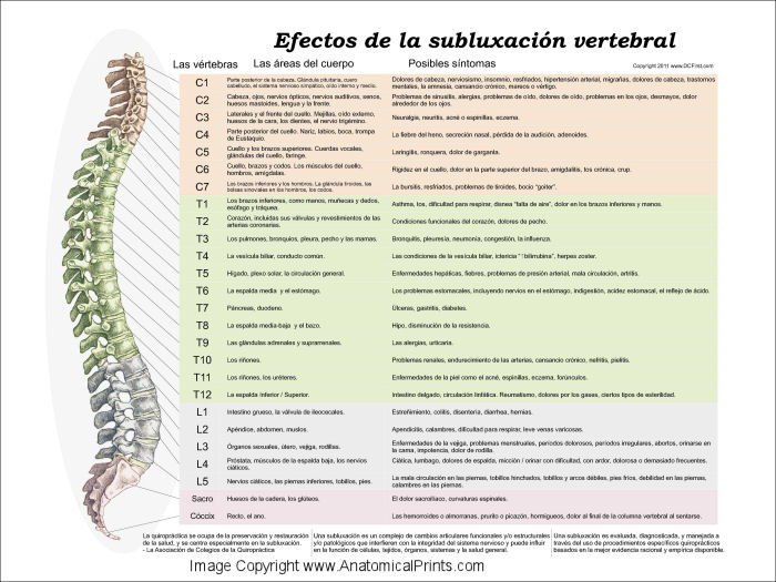 Effects of Spinal Subluxation